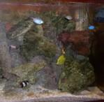distributeur de nauplies d'artemias Mini_mer_1