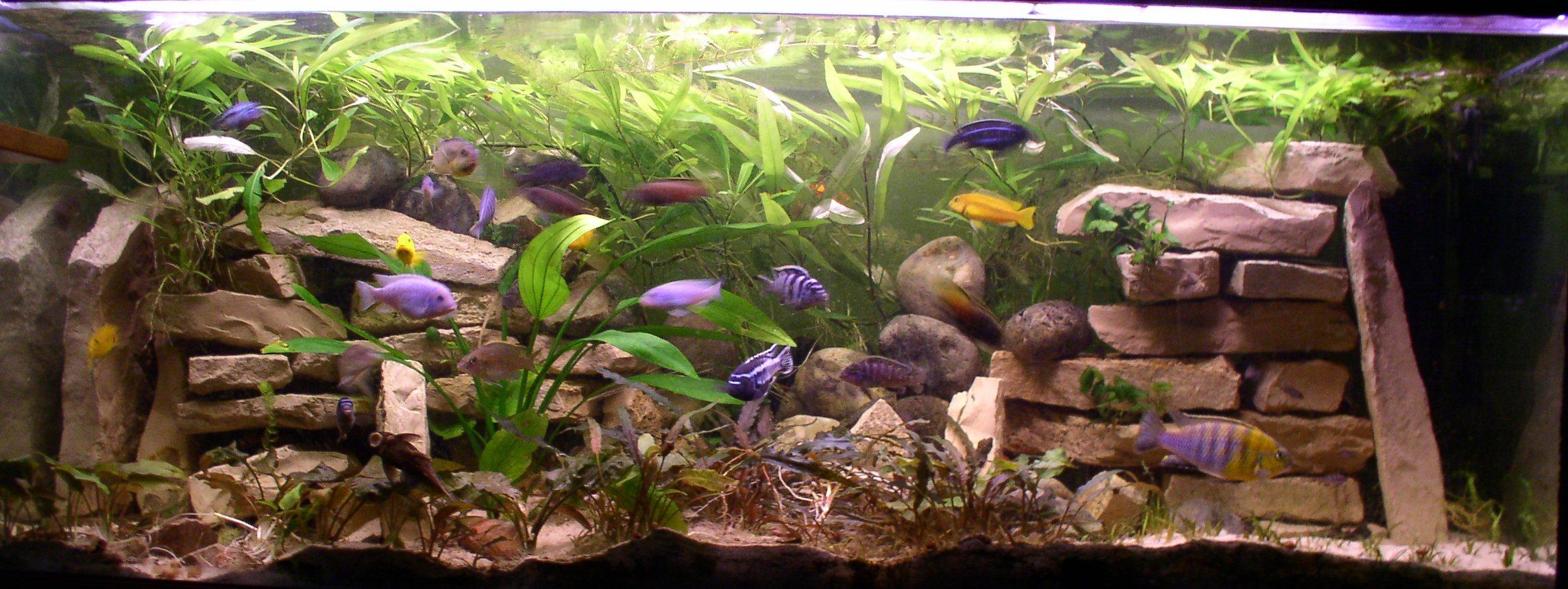 algues diverses et fertilisation besoin de conseils - Page 2 Plantes_bac_malawi