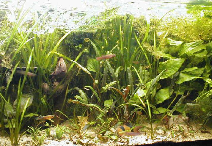 algues diverses et fertilisation besoin de conseils - Page 2 Fondlarge14